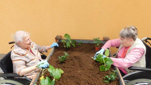 Ergoterapie - zahradničení 5